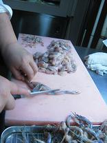 20090425-grenouille2.jpg