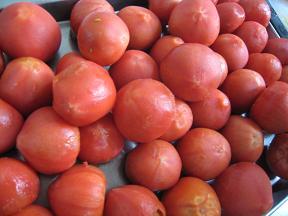 0508-tomate.jpg