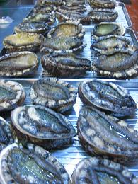 20090425-abalone.jpg