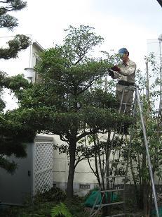 20090714-niwasi.jpg